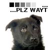 Portrait de littleblackdog